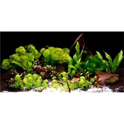 Aquarienpflanzen Zooplants