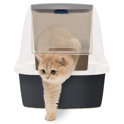 Fresh Magic Cat Litter