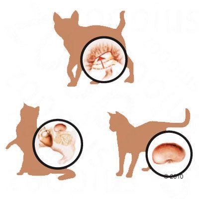 Ill S Science Plan Mature Adult  Sterilised Cat