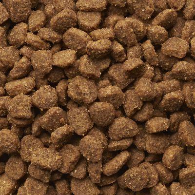 Best Organic Dry Cat Food Uk