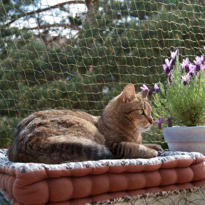 Rete protettiva per gatti con rinforzo metallico zooplus - Rete per gatti giardino ...