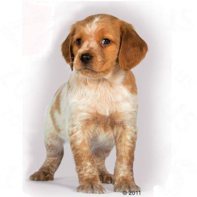 Royal Canin - Wikipedia